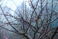 Winter tree branches Royalty Free Stock Photos
