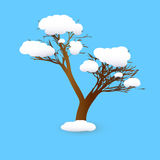 Winter tree. On branches of a tree white snow lies Royalty Free Stock Photos