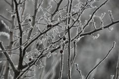 Winter. Tree with clean ice, cold Royalty Free Stock Image