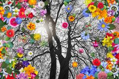 Winter Tree and Colorful Spring Flowers Royalty Free Stock Image