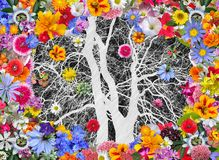 Winter Tree and Colorful Spring Flowers Royalty Free Stock Photos