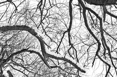 Winter tree conceptual image. Royalty Free Stock Images
