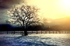 Winter tree conceptual image. Stock Photography