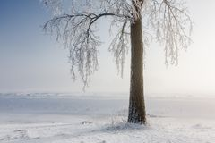 Winter tree covered with hoarfrost Stock Images