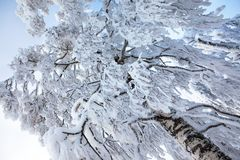 Winter tree covered with snow Royalty Free Stock Photo