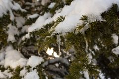 Winter tree covered with snow as background. Close up royalty free stock images