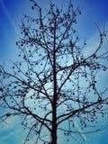 Winter tree. Cristal Palace of Madrid surroundings Royalty Free Stock Image