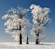 Winter tree in Czech Republic Stock Photo