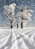 Winter tree in Czech Republic Royalty Free Stock Photos