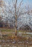 Winter tree. Detail with frost stock photography