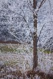 Winter tree. Detail with frost stock image