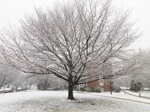 Winter Tree and a Dusting of Snow Royalty Free Stock Photo