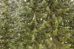Winter tree  with falling snow Stock Photos