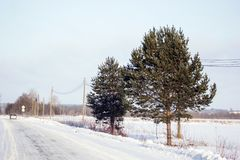 Winter tree in the field royalty free stock photography