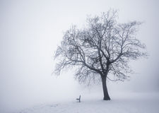 Winter tree in fog royalty free stock images