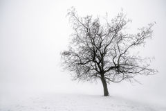 Winter tree in fog Royalty Free Stock Photography