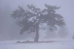 Winter tree in fog Stock Image
