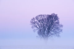 Winter Tree in Fog. At dawn, Michigan, USA stock photos
