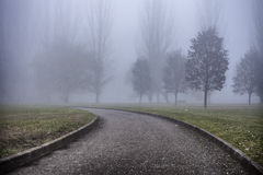 Winter tree in fog stock photography