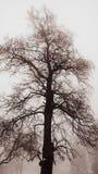 Winter tree in fog royalty free stock photos
