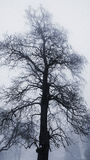 Winter tree in fog stock images