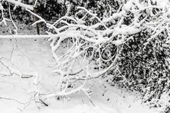 Winter tree forest background Stock Photography