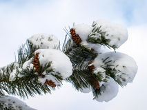 Winter. Tree in Winter Forest Freeze Royalty Free Stock Images