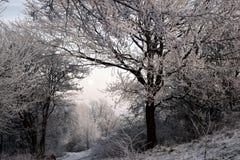 Winter, Tree, Frost, Snow Royalty Free Stock Photos