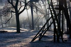 Winter, Tree, Frost, Woody Plant Stock Images