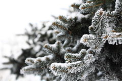 Winter tree. With frozen branches Stock Photos