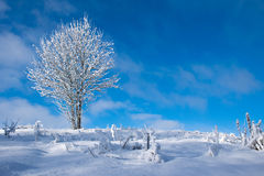 Winter tree. Frozen tree on winter field, low perspective Royalty Free Stock Photos