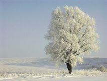 winter tree, frozen landscape Stock Photo