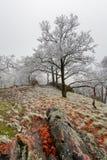 Winter tree Stock Photo