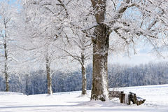Winter Tree, Germany Stock Images