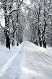 Winter tree hall. Seasonal photo - Santa road trail Stock Photography