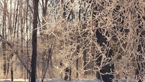 Winter tree. Hoarfrost on tree branches. Snow covered forest in winter stock video