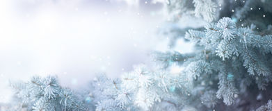 Winter tree holiday snow background. Beautiful Christmas border art design Royalty Free Stock Images