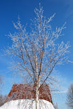 Winter tree and housetop Stock Photos