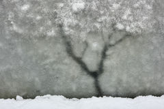 Winter tree. Stock Images