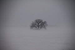 Winter Tree Isolated by Ground Blizzard Stock Image
