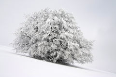 Winter. A tree in italian mountains in winter-time Royalty Free Stock Image