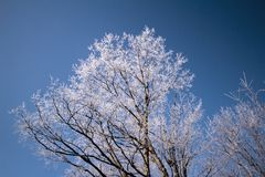 A winter tree with its branches frozen in ice stock photo