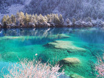 Winter tree and lake in Jiuzhaigou Stock Photos