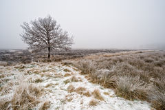 Winter tree landscape Royalty Free Stock Images
