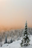 Winter tree. Winter landscape with a tree and valley fog in the background stock photo