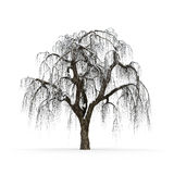 Winter tree without leaves on white background 3d rendering Royalty Free Stock Images