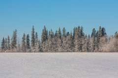Winter Tree Line with Blue Sky royalty free stock images