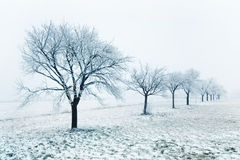 Winter tree line on a field Stock Photo