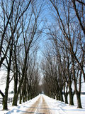 Winter tree lined lane 1 Stock Images