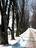 Winter tree lined lane 3 Royalty Free Stock Image